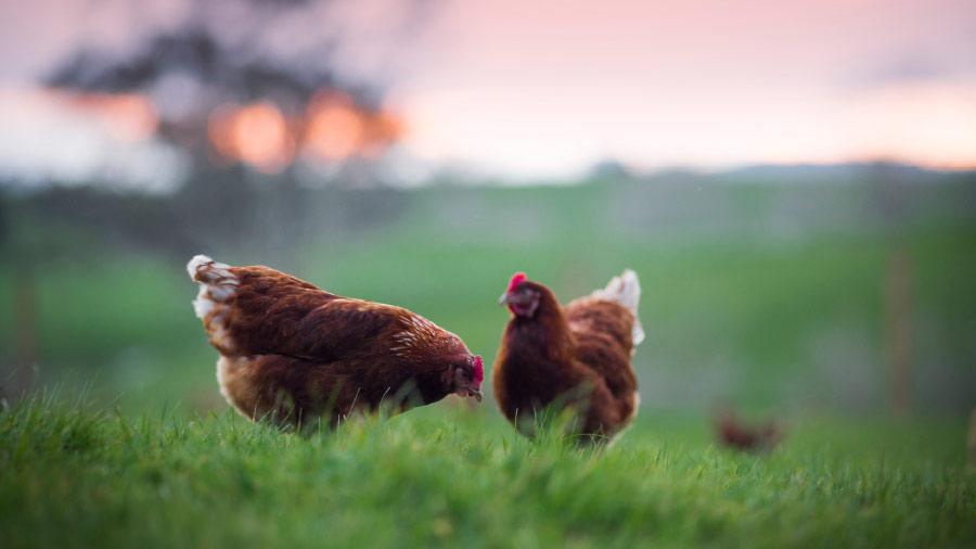 Frenz Eggs -Photography